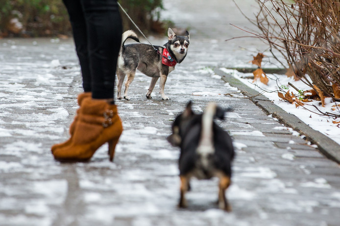 De honden uitlaten in Nijmegen