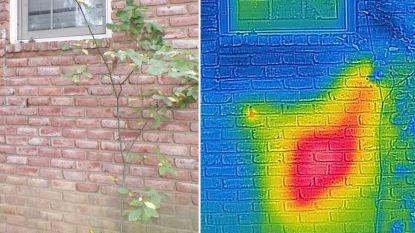 Bijenfluisteraar ontdekt gigantische nest in muur van huis
