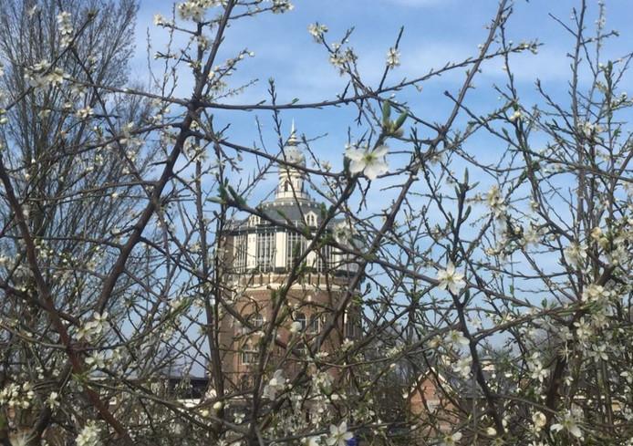 """Trudy van Schaik-'t Hart werkt bij het gezondheidscentrum bij DWL-de Esch. Volgens haar: 'De mooiste werkplek van Rotterdam'. ,, een foto van bloesem met op de achtergrond de oude watertoren."""""""