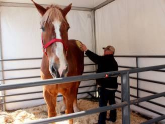 Grootste paard ter wereld van Belgische afkomst overleden in Wisconsin
