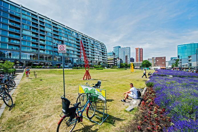 Door de hitte is het deze dinsdagmiddag stil op het grasveld met de havenkunstwerken naast de Markthal. Hier moet Rotta Nova komen, maar velen willen het groen behouden.