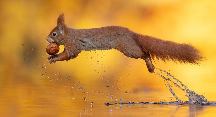De nieuwste eekhoornfoto gaat net als de vorige viraal.