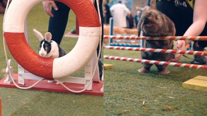 Konijnen die aan jumping doen? Het kan in Aarschot