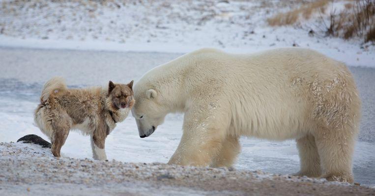Het kijken naar dierenfilmpjes geeft hoop en steun.  Beeld Getty Images/iStockphoto