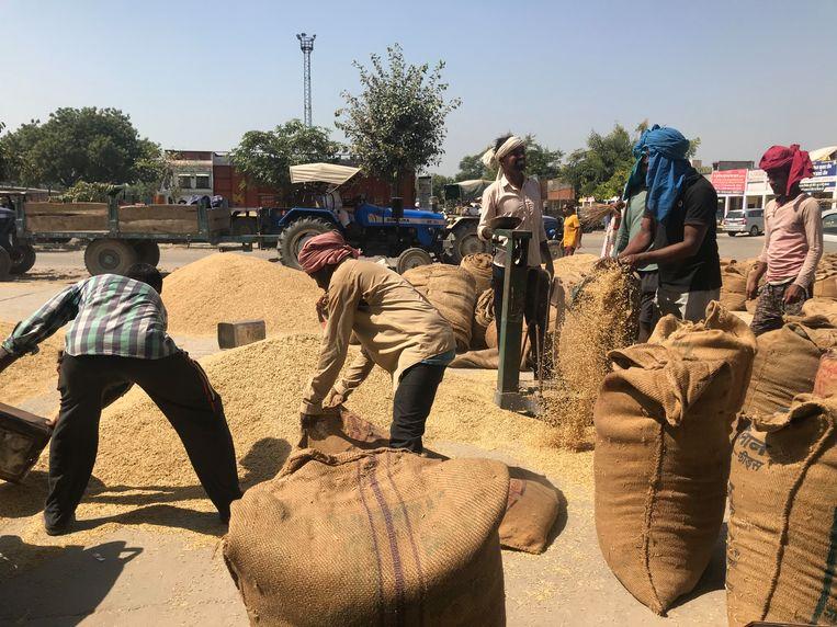 Rijstoogst wordt gewogen en in zakken gevuld op de groothandel in Sonepat, Haryana, India Beeld Aletta André