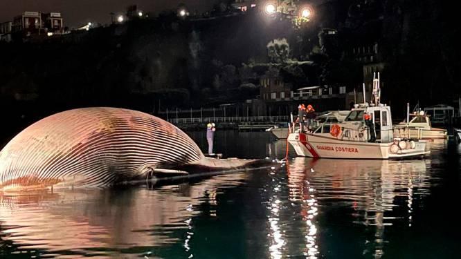 Italiaanse kustwacht heeft handen vol met walviskadaver van 70 ton