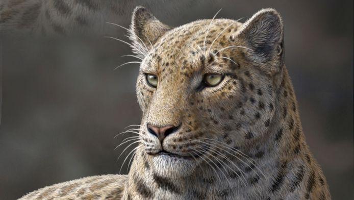 Een reconstructietekening van Panthera blytheae.