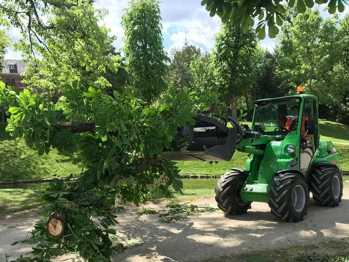Later wordt de boom omgehakt.