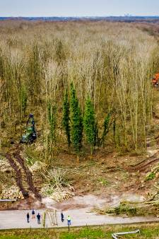 Moet de kap van meer dan duizend bomen in Heinenoord stoppen? Rechter beslist woensdag