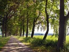 LTO Lochem: 'plant boom iets verder van weiland'