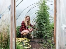 Ellen teelt intens smakende tomaten: 'Ik houd van ze, omdat ze zoveel aandacht vragen'