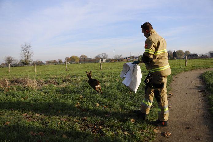 De brandweer heeft zondag een gewonde ree uit een hek bevrijd in Oeffelt.