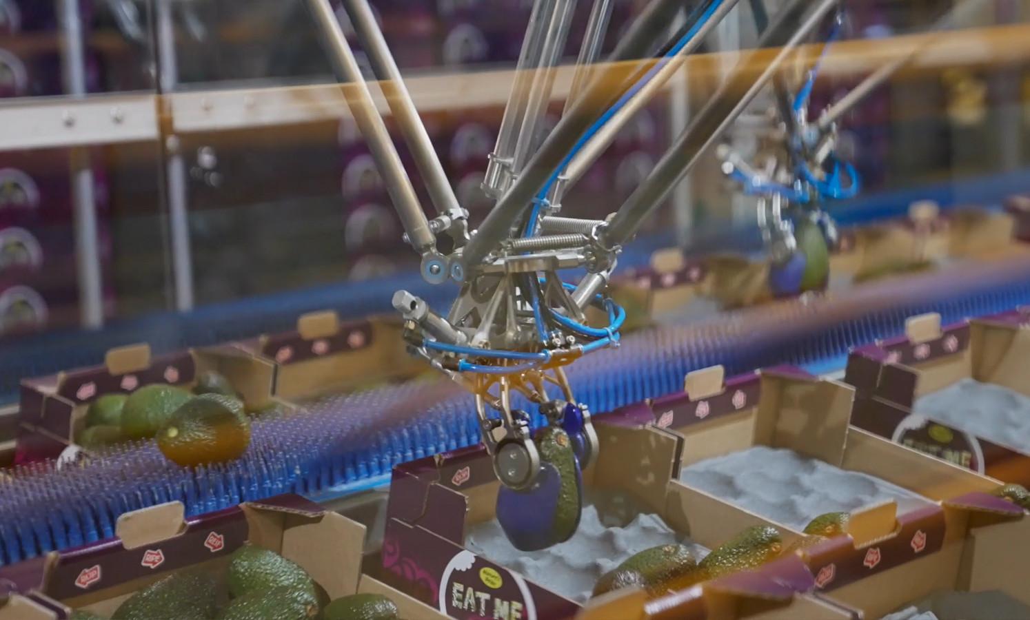 De robothandjes ('grippers') van de Speedpacker van machinefabriek Selo in Hengelo kunnen heel voorzichtig 240 avocado's per minuut verpakken.