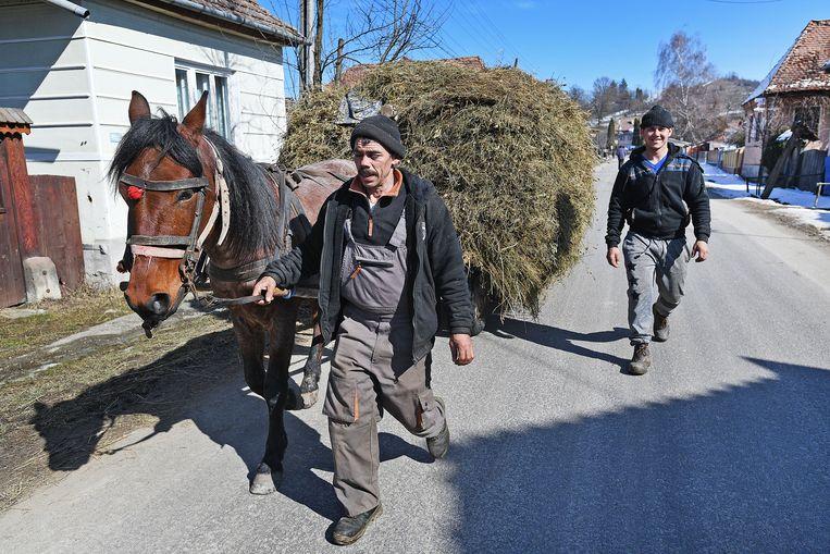 Hongaarse boeren aan het werk in Roemenië. Foto Guus Dubbelman / de Volkskrant Beeld null