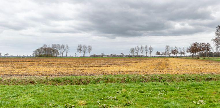 Landerijen in de Drentse Veenkoloniën, met rechts het land bespoten met glyfosaat. Beeld Harry Cock / de Volkskrant