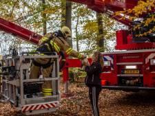 Brandweer wederom in actie: Pino al voor de derde keer uit hoge boom gered