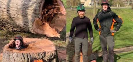 Mannen verdwijnen bijna helemaal in door en door rotte stam van gerooide boom in Goes