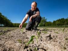 Duizenden maïsplanten van Twellose boer Evert-Jan opgegeten door roeken: 'Haal beschermde status van deze vogels weg'