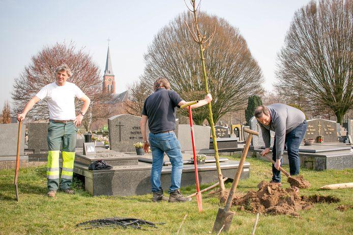 Op de parkbegraafplaats van Tereken worden 75 jonge boompjes in de grond gezet.