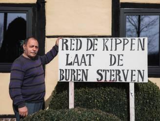 """Buurtbewoner Jos (65) haalt slag thuis, kippenhouder mag stal niét uitbreiden: """"Wij leven hier al in de stank"""""""