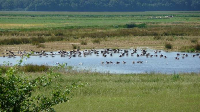 De paddenpoel in de Vughtse Gement zit vol vogels die er een bad nemen.