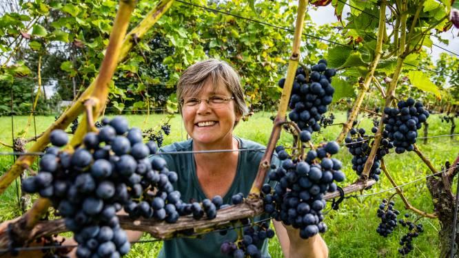Wijn van eigen bodem wint snel meer terrein (en Gelderland staat met stip bovenaan)