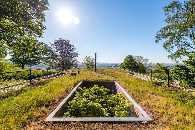 Het groendak op straatniveau lijkt te versmelten met het landschap. De boom op de patio strekt zich uit door de opening in het dak. Beeld Luc Roymans