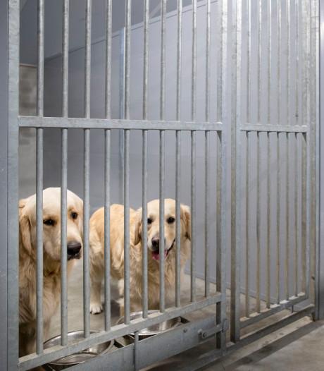 Het coronavirus nekt ook de honden- en kattenpensions: 'We zien geen hond meer'