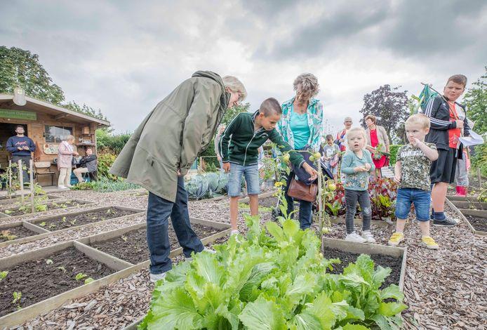 Max Baaijens legt in de dorpstuin in Ovezande alles uit over de tomaten. De bezoekers hangen aan zijn lippen.