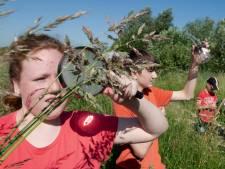 Water, grond, planten en dieren: brugklassers in Culemborg onderzoeken het allemaal