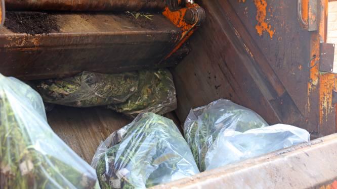 Kleinzoon legendarische Oranje-international betrokken bij cannabisplantage in Asse: 36 maanden cel gevorderd