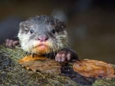 Voorzichtig herstel diersoorten in Nederland