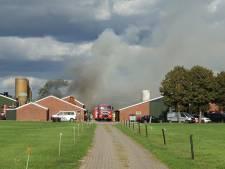 Grote schuurbrand in Dedemsvaart: koeien gered van verstikking