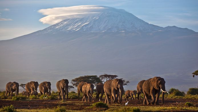 De Kilimanjaro, met op de voorgrond olifanten