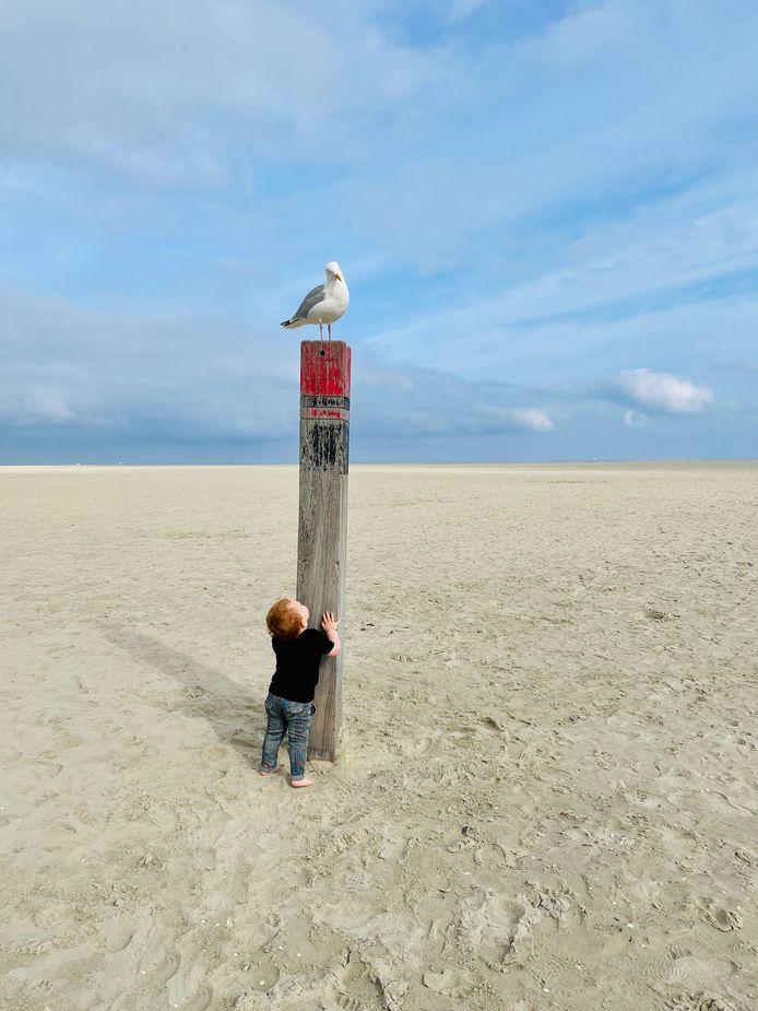 De kleine Levi Meeuwis uit Oosterhout heeft oogcontact met een meeuw op het strand in De Cocksdorp, Texel.