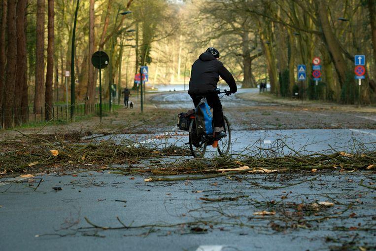 In Brussel sneuvelden vooral bomen en takken. Beeld Photo News