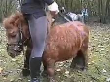 Tweede filmpje van mishandeling shetlandpony
