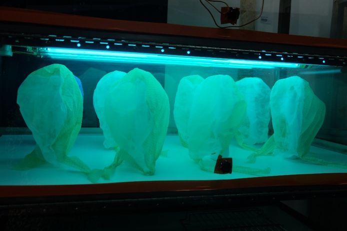 Het UVC-licht schakelt bacteriën en virussen uit.