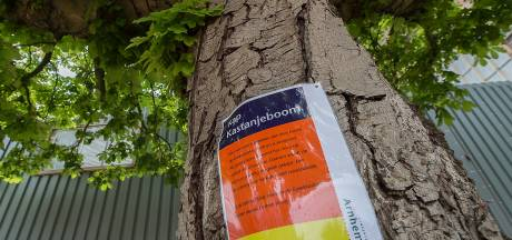 Arnhemmer blijft baas in eigen tuin en mag boom kappen