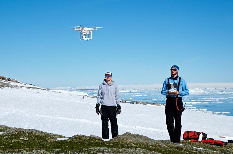 Wetenschappers van o.a. Stony Brook University gebruikten drones om de kolonie te onderzoeken. Beeld Woods Hole Oceanographic Institution