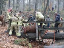 Applaus voor brandweermannen die uitgegleden pony bevrijden
