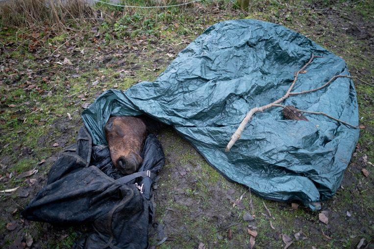 Dit paard stierf in een koude beek waarin hij sukkelde na te zijn geschrokken van geweerschoten