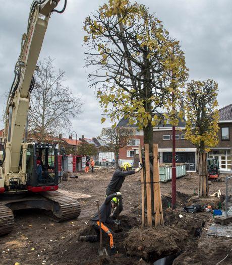 Conifeer of andere 'waardevolle' boom beu? Dat kan je zo honderden euro's kosten