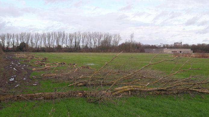 Voor de aanleg van het zonnepark ten zuiden van Sas van Gent zijn bomen geveld, om schaduwwerking over een aantal zonnepanelen te voorkomen waardoor die minder opbrengen.