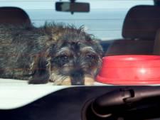 Hondje urenlang in bloedhete auto op parkeerterrein TT-circuit Assen, maar geen bewijs voor dierenmishandeling