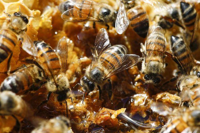 Selon Greenpeace, les populations d'abeilles domestiques ont chuté de 25% en Europe entre 1985 et 2005. Ces derniers hivers, la mortalité de ces populations était de 20 % en moyenne en Europe, voire de 53 % dans certains pays.