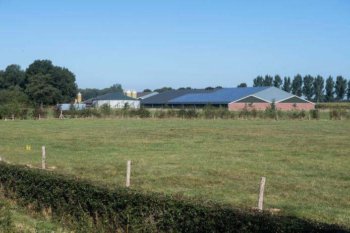 Het bedrijf met de megastal voor vleesvarkens van de maatschap Ter Haar-Koier aan de Walemaatweg in het buitengebied van Geesteren.
