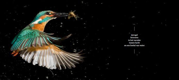 'IJsvogel bevroren in het vacuüm tussen lucht en het heelal van het water'. De teksten van Dieleman halen andere realiteiten naar boven in de foto's van Coppens.
