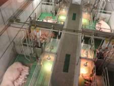 Vanuit de skybox naar de varkens kijken in Hoge Hexel