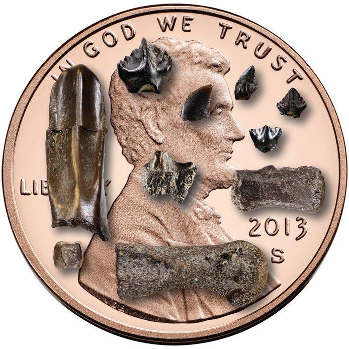 Enkele van de beenderen en tanden die gevonden werden tijdens het onderzoek.
